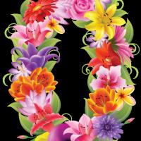 zingi gallery галерея pictures число,ноль,цветок,тюльпан,