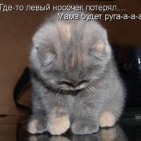 zingi gallery галерея pictures мем