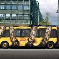 zingi gallery галерея pictures транспорт