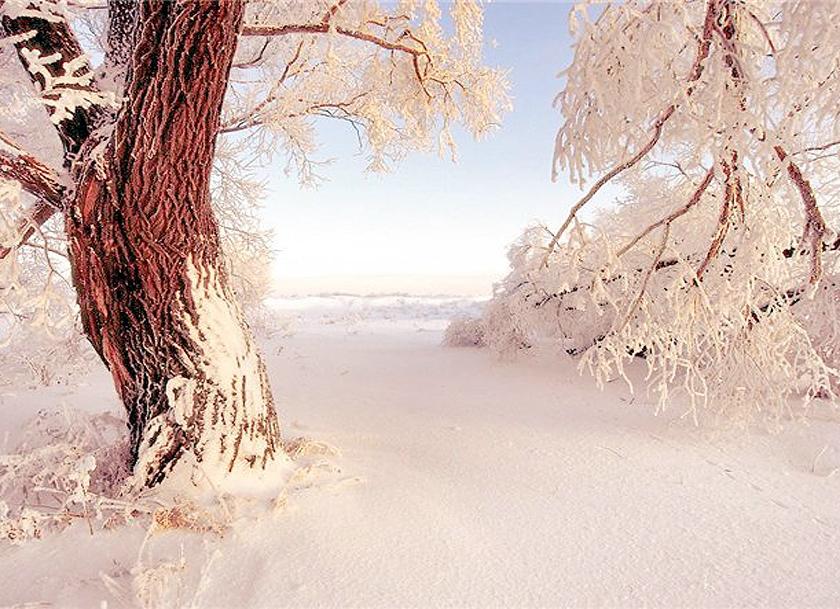 Image to the word февраль,  Pictures gallery of Zinkod, February,февраль,месяц,, Февраль Второй месяц календаря и третий месяц зимы