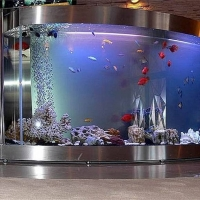zingi gallery галерея pictures аквариум, рыбки, дизайн, необычно