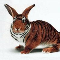 zingi gallery галерея pictures кролик,питомцы,