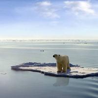 zingi глобальное потепление global warming
