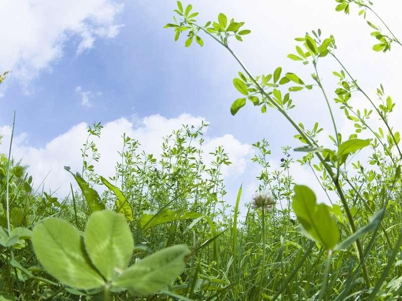 Image to the word оладьи,  Pictures gallery of Zinkod, растения,plants,, Оладьи из вареного картофеля  Оладьи из вареного картофеля