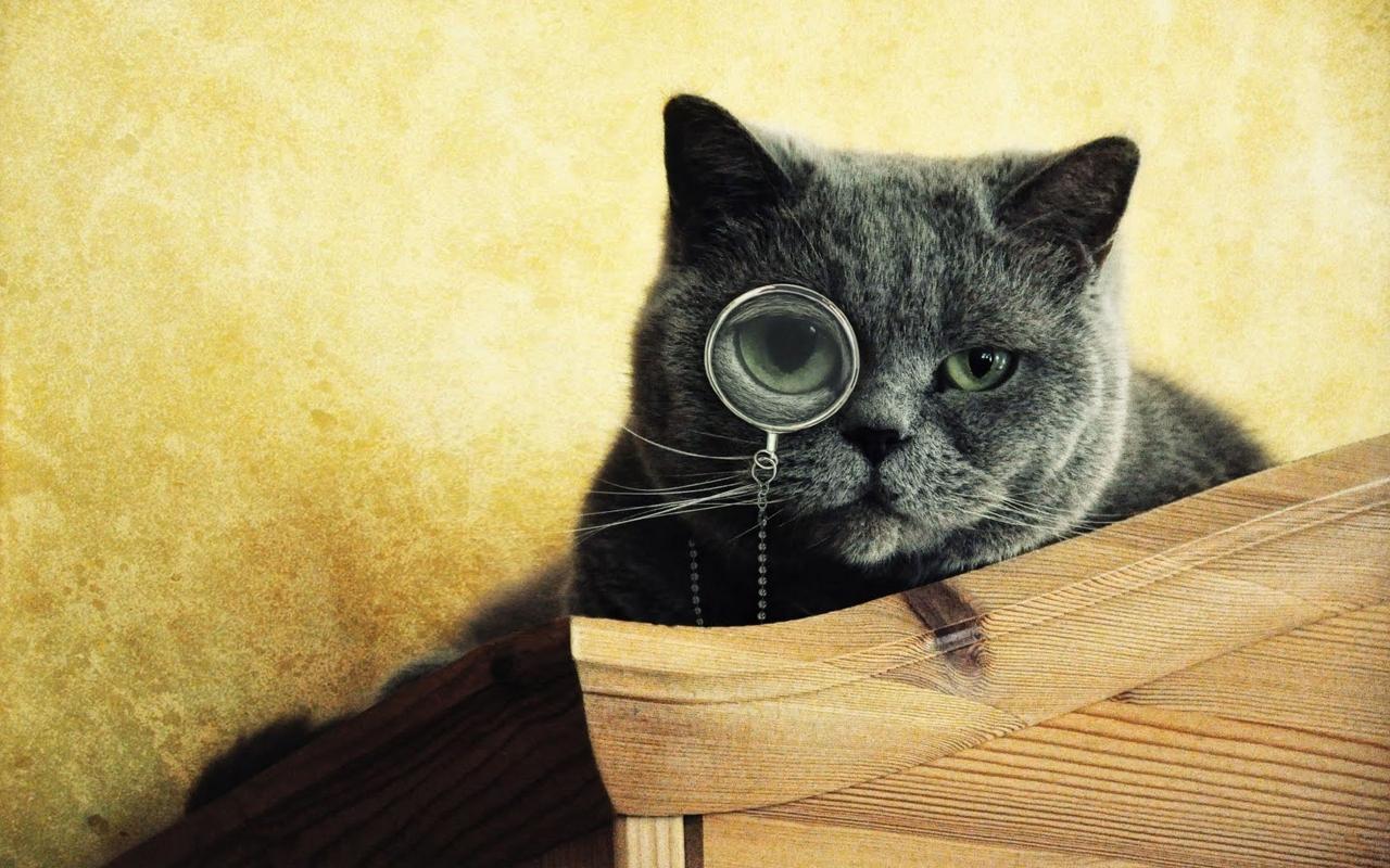 Image to the word кот,  Pictures gallery of Zinkod, кот,котэ,интересно,радость,, Домашняя кошка  Домашняя кошка принадлежит к семейству кошачьих