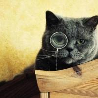 zingi gallery галерея pictures кот,котэ,интересно,радость,