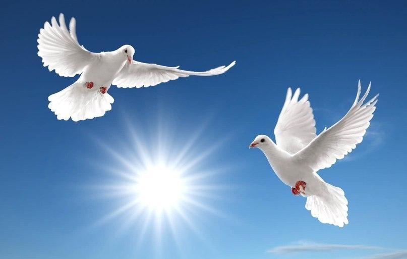 Image to the word птица,  Pictures gallery of Zingi, язык, птицы, природа, интересно, ПТИЦЫ (Aves) класс позвоночных животных Характеризуются тем, что тело их покрыто перьями и передние конечности видоизменены в органы полета — крылья