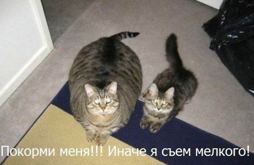 Pictures gallery of Zingi, мем, Zingi is an open book, in which everyone can make his own chapter.