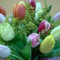 zingi gallery галерея pictures цветы